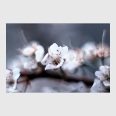 Постер Spring blossom