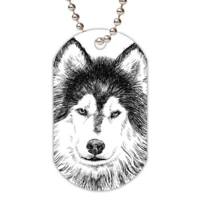 Жетон dog-tag  Собака хаски карандаш