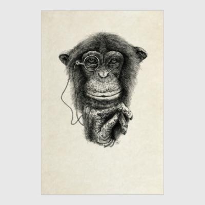 Постер Monkey