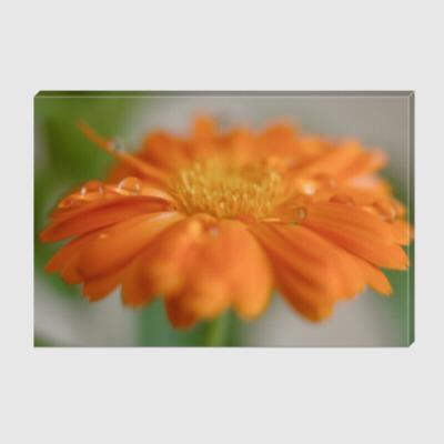 Холст Капельки на цветке