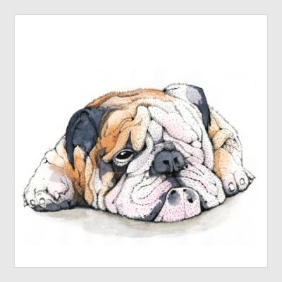 Постер Dog