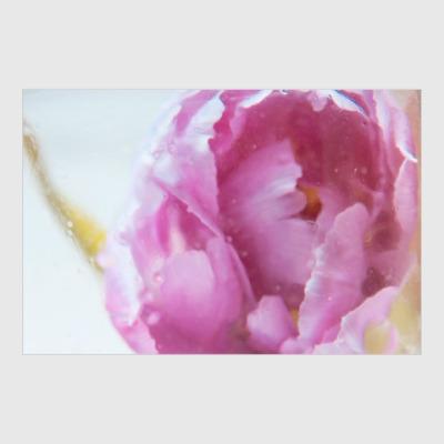 Постер Акварельный цветок