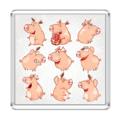 Магнит Свиньи