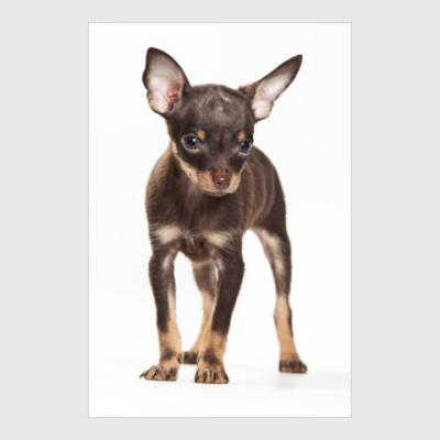 Постер Собаки и щенки