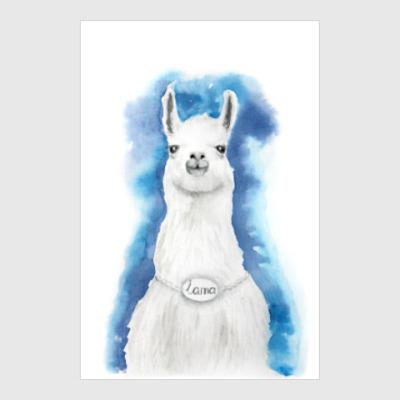Постер лама