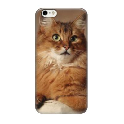 Чехол для iPhone 6/6s Удивленный взгляд рыжего кота