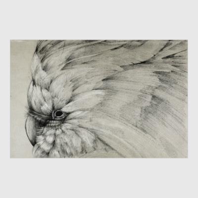 Постер Былый попугай