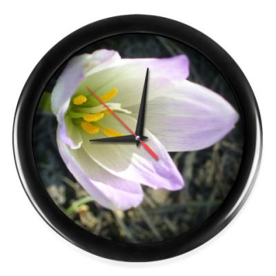 Настенные часы 'Цветок западного ветра'