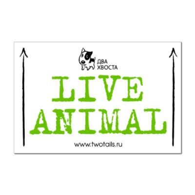 Наклейка (стикер) Наклейка Live Animal (12x8)