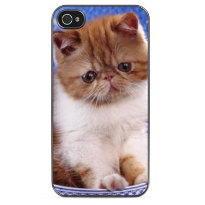 Чехол для iPhone Персидский котенок