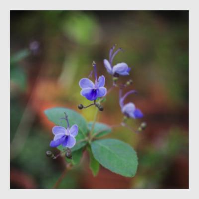 Постер синий цветок