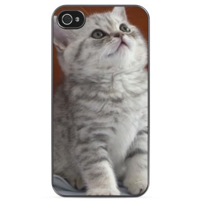 Чехол для iPhone Светлый котенок