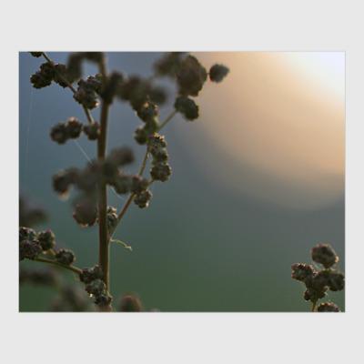 Постер Растение