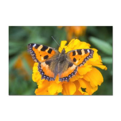 Наклейка (стикер) Бабочка на цветке