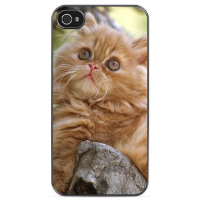 Чехол для iPhone Персидский котик
