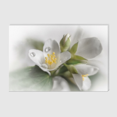 Холст Цветки жасмина