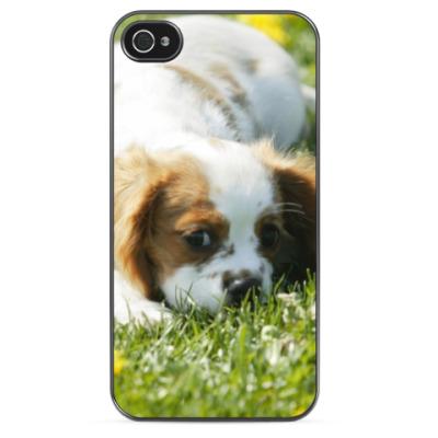 Чехол для iPhone Собачка