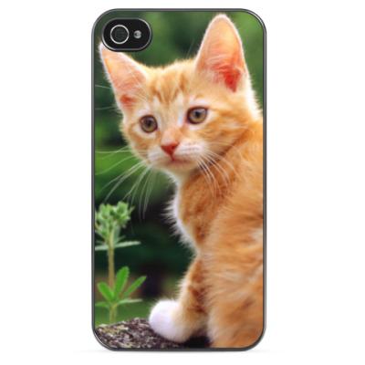 Чехол для iPhone Рыжий котенок