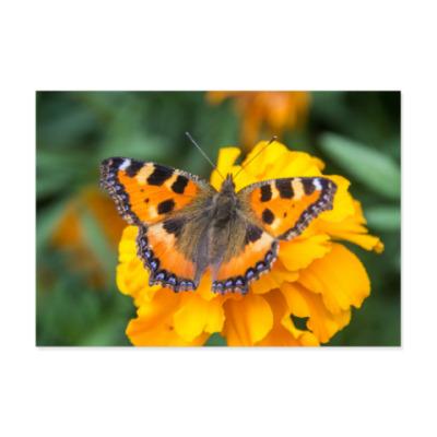 Виниловые наклейки Бабочка на цветке