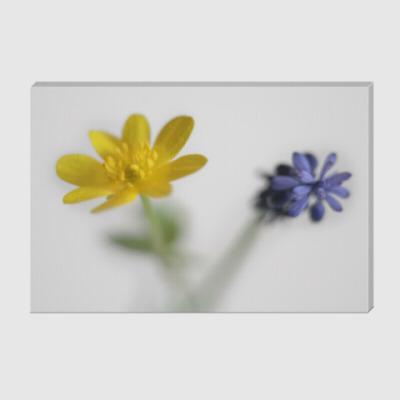 Холст Два диких цветка