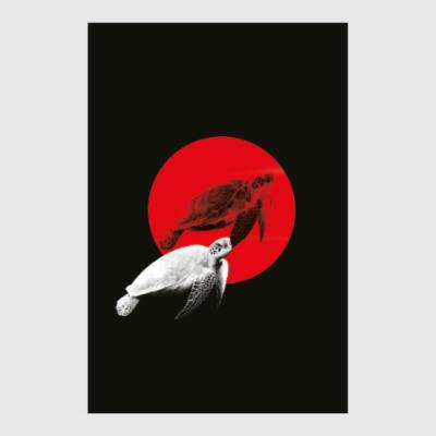 Постер черепашки