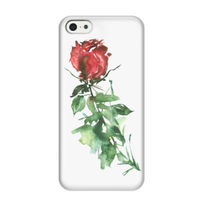 Чехол для iPhone 5/5s Роза. Акварельный цветок