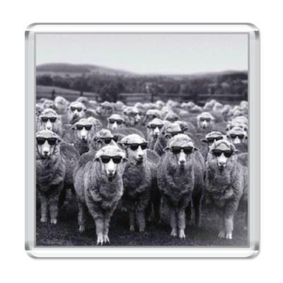 Магнит Овечки в очках
