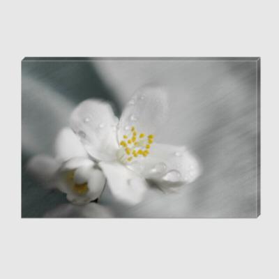 Холст Цветки жасмина и капельки