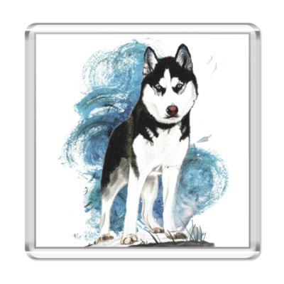 Магнит Собака породы хаски