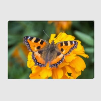 Холст Бабочка на цветке