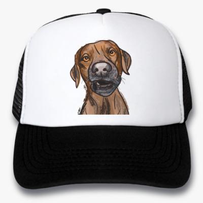 Кепка-тракер Бродячий пёс