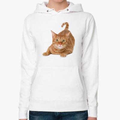 Женская толстовка худи Рыжий котик