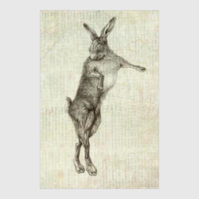 Постер Rabbit