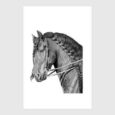 Постер Профиль коня