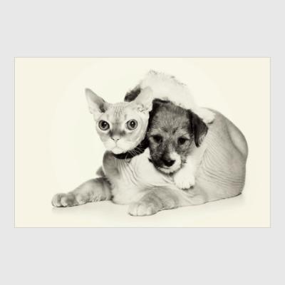 Постер Милые котики, коты и котята
