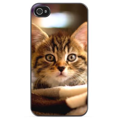 Чехол для iPhone Миленький котенок