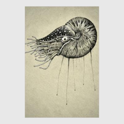 Постер Nautilus