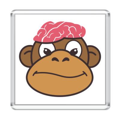 Магнит  Обезьяньи мозги