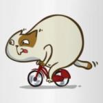 Велокот — Пятничный Котик №46